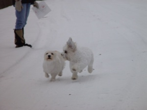 Maggie and Sebastian romping in the snow