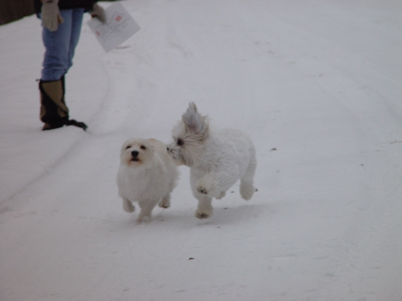 Maggie and Sebastian playing in the snow.