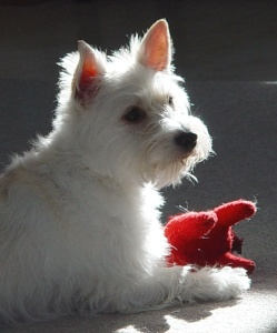 Maggie with red toy