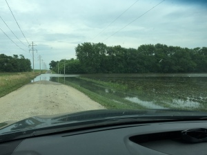 Flooded bean field - Champaign, IL