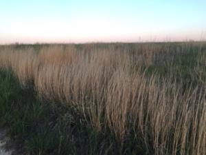 Prairie grassland, Photo by Kay Stewart