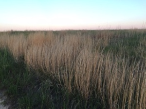 Prairie grassland, Photo by Kay Stewart
