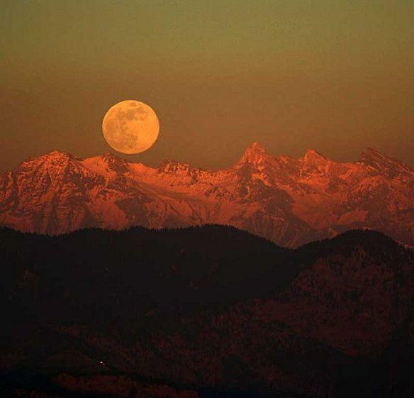 d593c79180a244b638efd9900ecf7e44--himalayan-moonlight