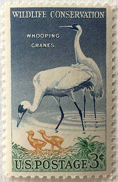 photo of U.S.  Postage 3-cent Wildlife Conservation postage stamp of whooping cranes.
